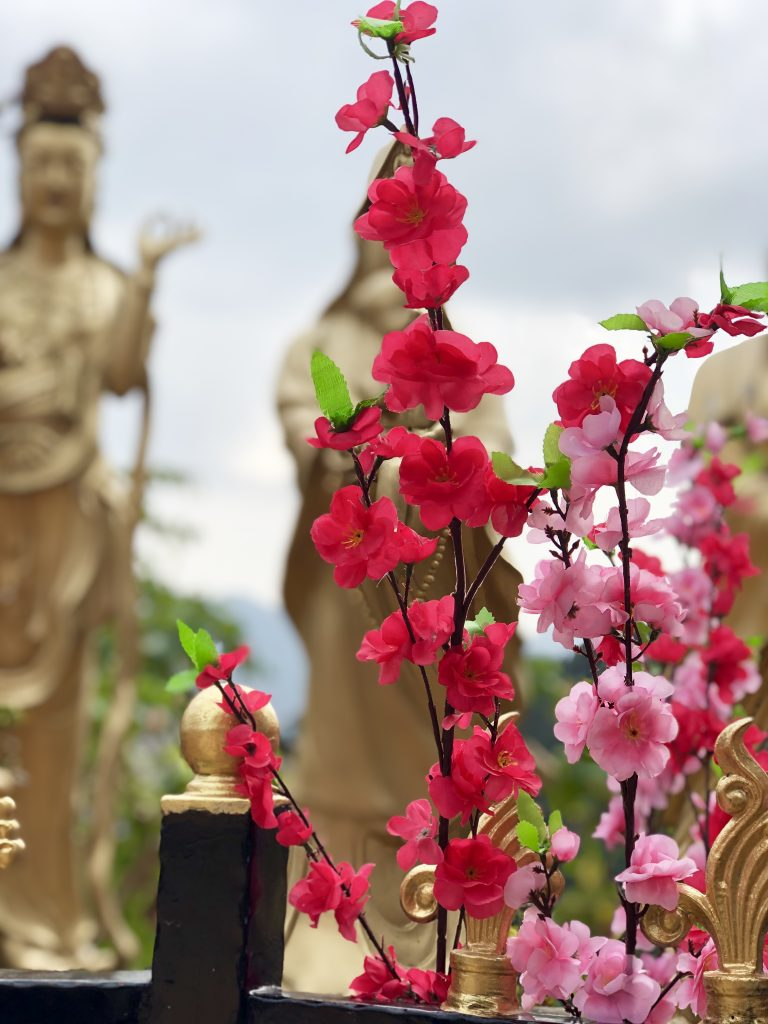 Pink flowers with golden statues in the background at the 10,000 buddhas monastery in Hong Kong. 4 Days in Hong Kong: Markets and Monasteries  www.thedancingcircustraveller.com