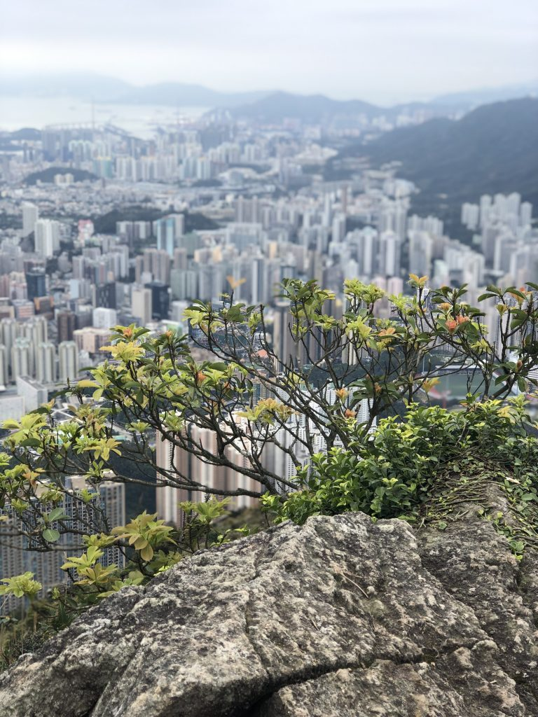 bush with view of Hong kong in the back ground Suicide Peak Hike Hong Kong  www.thedancingcircustraveller.com